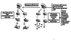 Диагностика и лечение - хронический гломерулонефрит