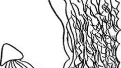 Изменение рельефа слизистой оболочки желудка