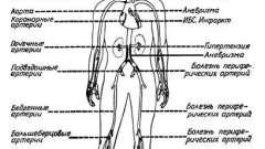 Морфологические особенности развития атеросклероза - атеросклероз и пути его профилактики