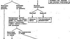 Оценка и диагностический подход - аменорея