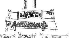 Raillietina micracantha - давэнеаты - raillietina