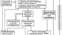 Роль иммунологических механизмов в развитии атеросклероза - патоморфология и патогенез атеросклероза