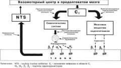 Симпато-адреналовая система и ее активация