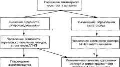 Скопление лейкоцитов и образование пенистых клеток - патоморфология и патогенез атеросклероза