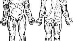 Влияние массажа на крово - и лимфоток - анатомо-физиологические основы массажа, механизм его действия на организм