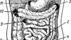 Внутренние брюшные грыжи - анатомические варианты и ошибки в практике врача