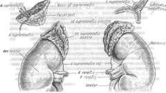 Заболевания надпочечников - эндокринология